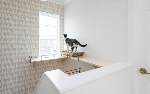 ロビンスジャパン 猫と暮らす家づくり 内装